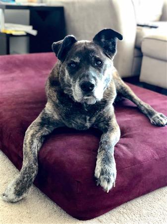 About Big Barker Dog Beds