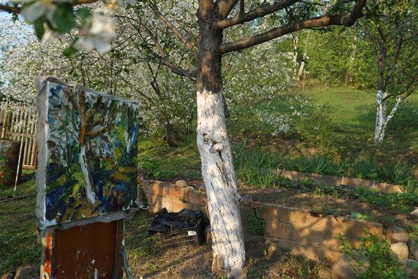 Apple tree in blossom 16x20 2019    DSC09904
