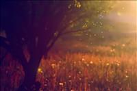 Simple Lightbox Image Gallery Slideshow | Cincopa