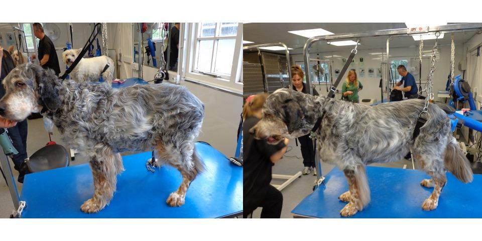 Borders Pet Grooming Dog Grooming Pathhead Midlothian Borders