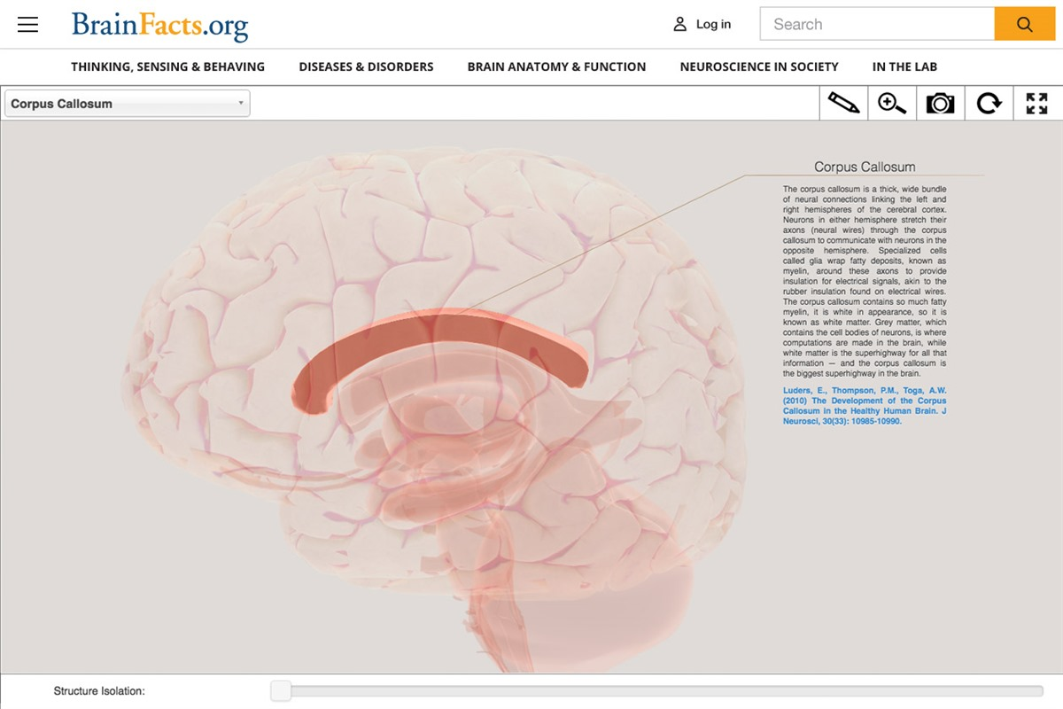 Society for Neuroscience - Redesigned <em>BrainFacts.org</em> to ...
