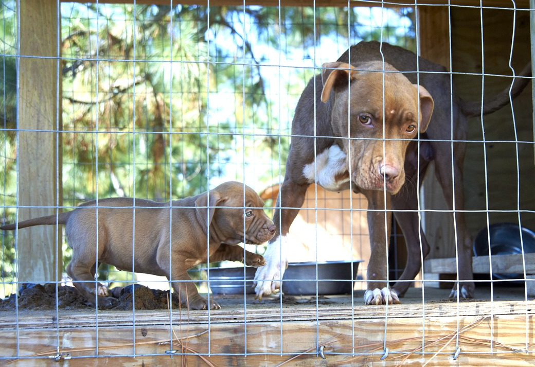 The Criminal, Underground World of Dog Fighting   ASPCA