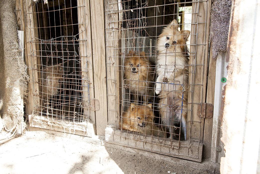 townipproject     Puppy Mills Oprah com Missouri puppy mill rescue ASPCA