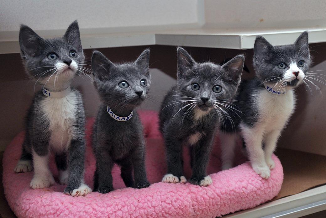 ASPCA Kitten Nursery | Caring for Neonatal Cats| ASPCA